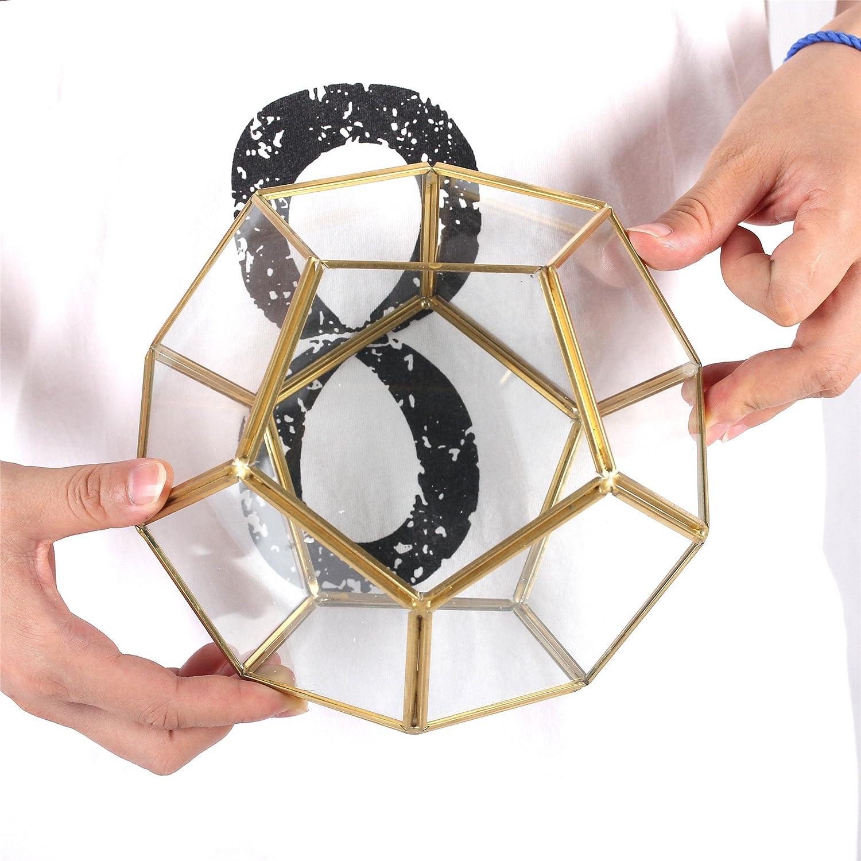 NCYP Terrario de cristal claro Pent/ágono dodecaedro suculenta terrario