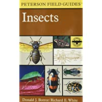 A Field Guide to Insects: America North of Mexico (Peterson Field Guides)