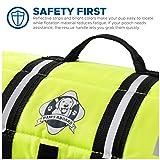 Paws Aboard Dog Life Jacket,  Fashionable Dog