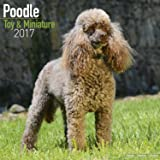Miniature Poodle Calendar 2017 - Toy Poodle Calendars - Dog Breed Calendars - 2016 - 2017 wall calendars - 16 Month by Avonside