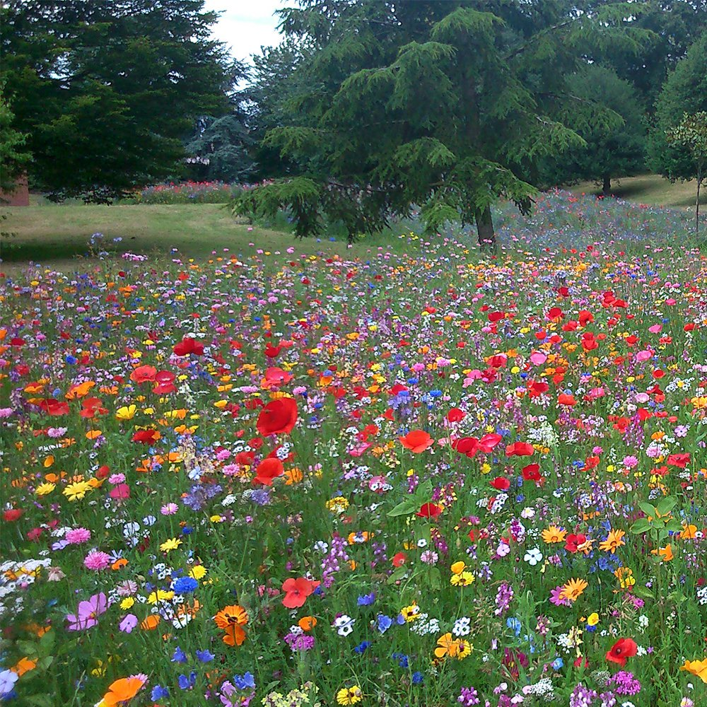 100% Wild Flower Seed Mix Annual Meadow Plants Attracts Bees & Butterfly (50g) GardenersDream