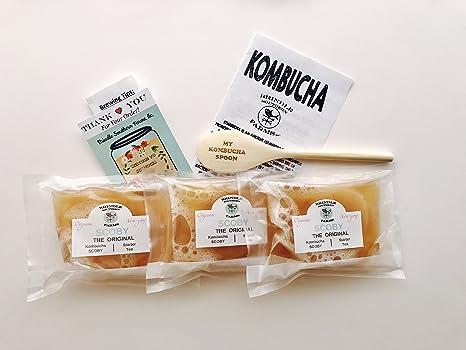 Amazon.com: 3 x orgánico Kombucha scoby Culturas con 3 tazas ...