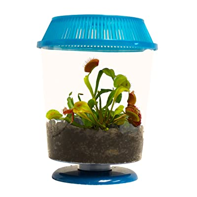 "Adult Venus Flytrap in 4.5"" BLUE Terrarium - Carnivorous Plant Fly Trap by Nature Gift Store: Grocery & Gourmet Food"
