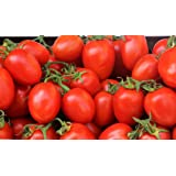 Organic Amish Paste Tomato Seeds - 2 SEED PACKETS! - Over 100 Heirloom Non-GMO USDA Organic Seeds