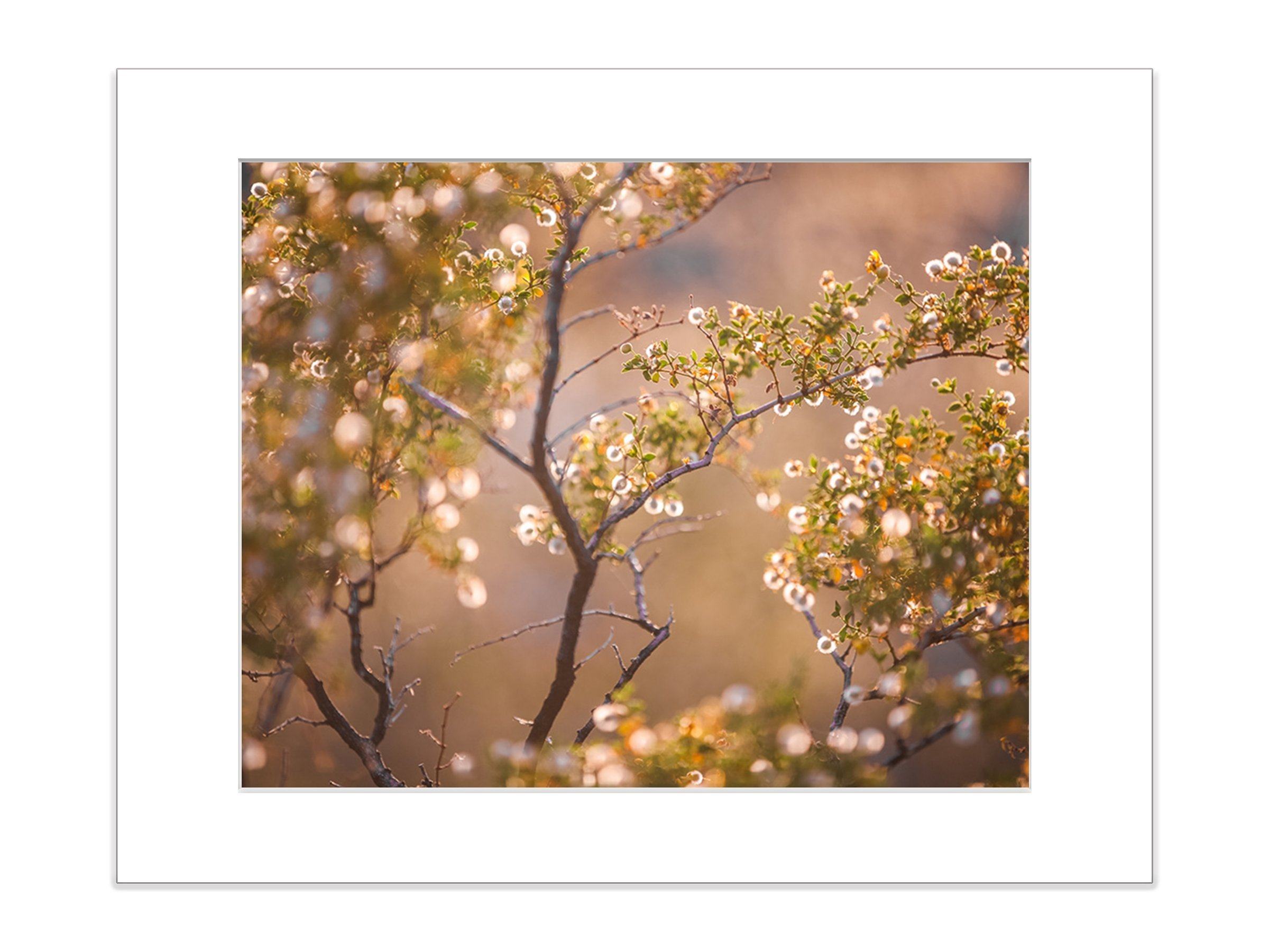 Abstract Desert Flower Yellow Bloom Botanical Nature Photo 5x7 Inch Matted Print
