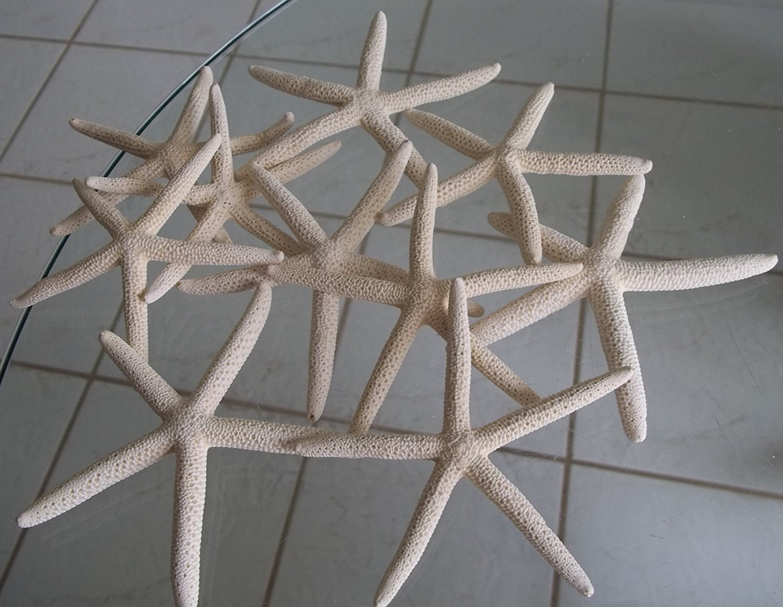 SUxian 10 lápices de estrella de mar para decoración de boda, concha natural de concha de estrella de mar (blanco)