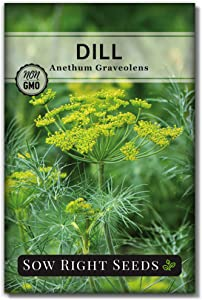 Sow Right Seeds - Dill Seed for Planting - All Non-GMO Heirloom Dill Seeds with Full Instructions for Easy Planting and Growing Your Kitchen Herb Garden, Indoor or Outdoor; Great Gift