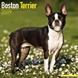 Boston Terrier Calendar 2019