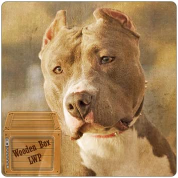 Amazon com: Pitbull dogs Live Wallpaper: Appstore for Android