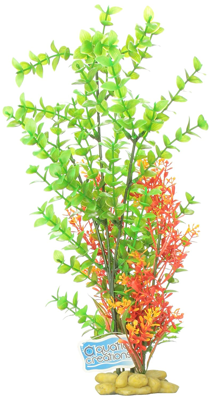 Aquatic Creations '15 verde Bacopa Plant