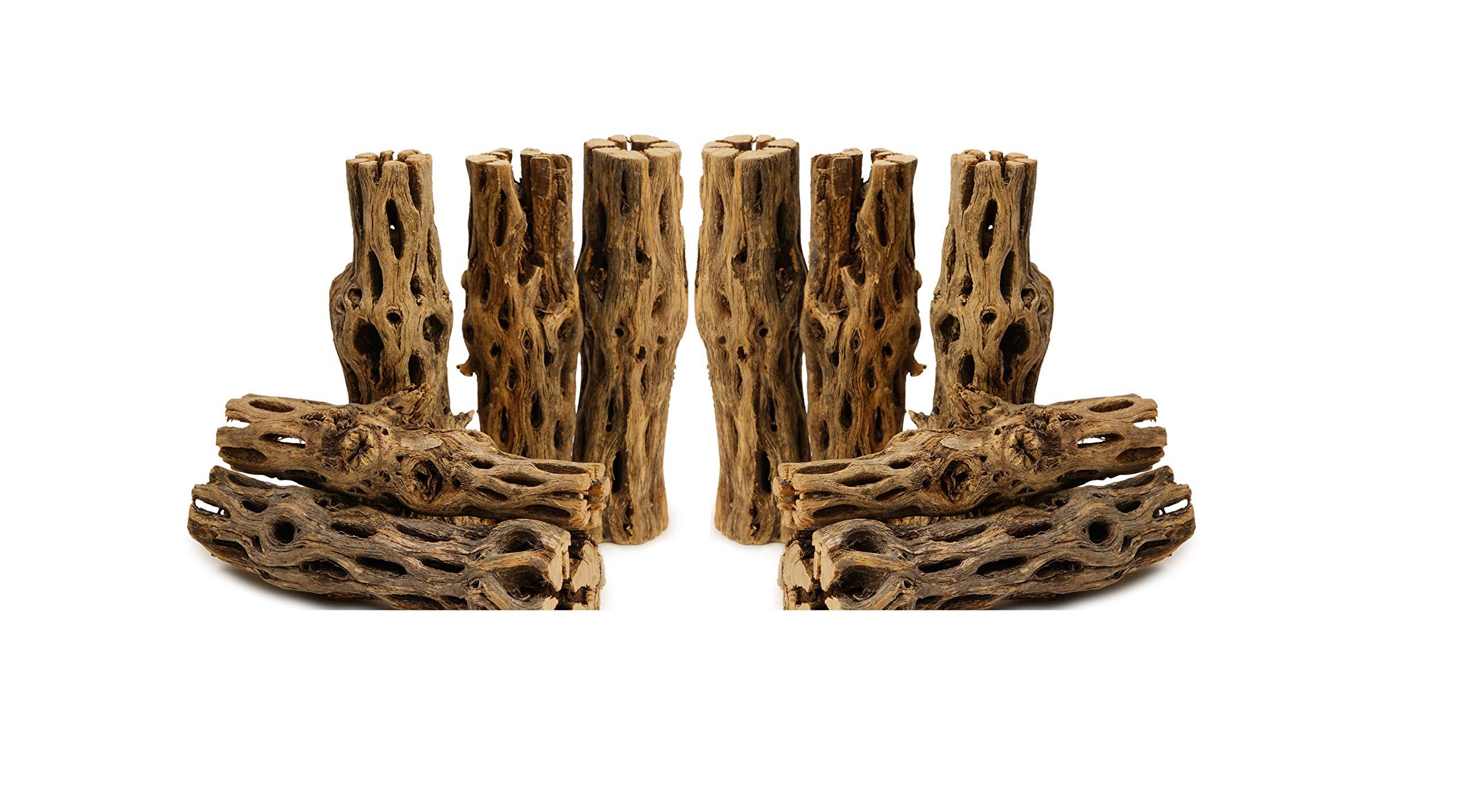 NApremium Natural Cholla Wood | 10 Pieces of 5-6'' Long Natural Cholla Wood for Aquarium Decoration, Hermit Crabs, Shrimp (20x 5-6'' Cholla) by NilocG Aquatics