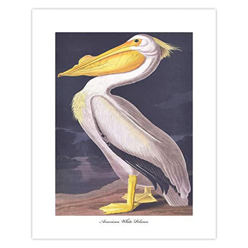Pelican wall art Print decor Watercolor bird Painting Poster Wading Wild bird artwork on white background gift