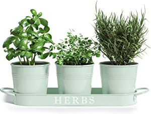 """Barnyard Designs Herb Pot Planter Set with Tray for Indoor Garden or Outdoor Use, Soft Mint Metal Succulent Potted Planters for Kitchen Windowsill, (Set of 3, 4.25"""" x 4"""" Planters on 12.5"""" x 4"""