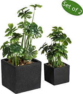 Nattol Artificial Desktop Plant Faux Tabletop Greenery in Square Black Cement Plant pots for Office and Home décor, Set of 2