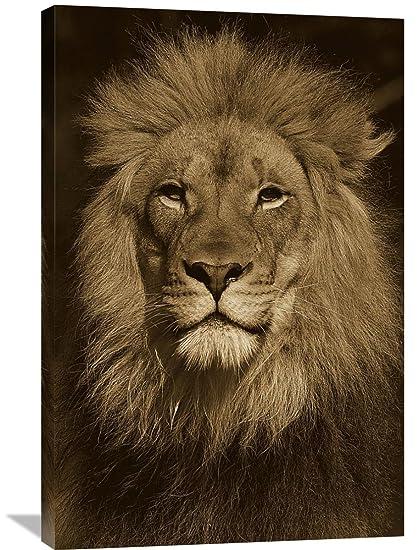 Amazon Com Global Gallery San Diego Zoo African Lion Male Portrait