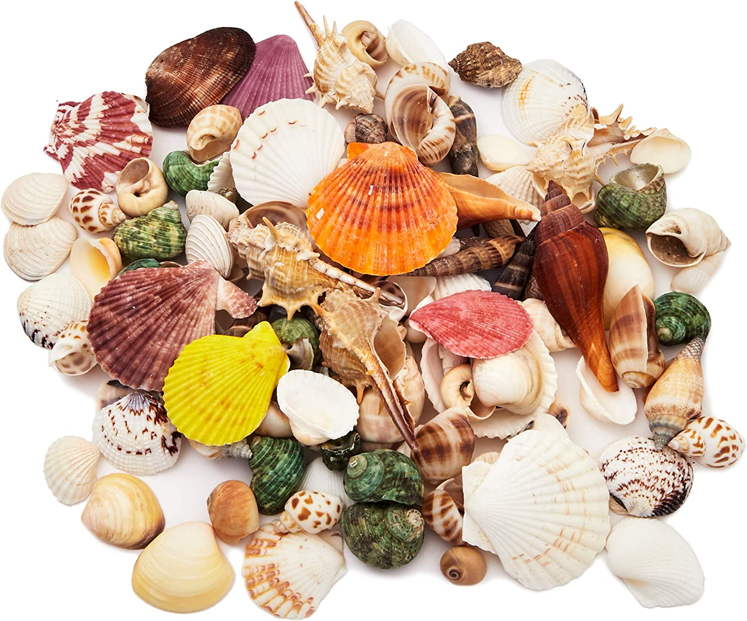 Juvale Mixed Sea Shells for DIY Crafts, Beach Decor (135 Count)