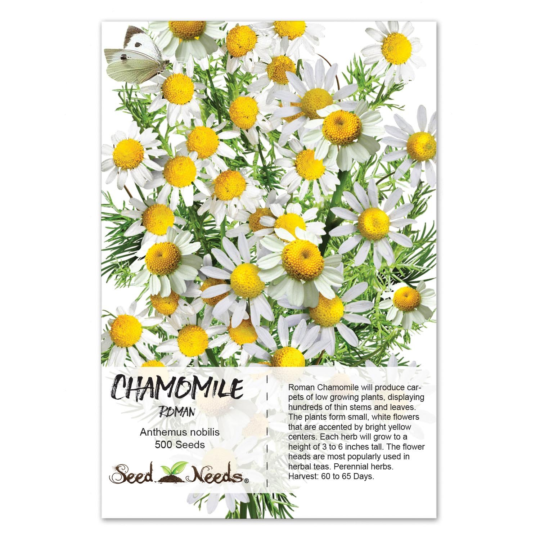 Amazon Package Of 500 Seeds Roman Chamomile Anthemus Nobilis