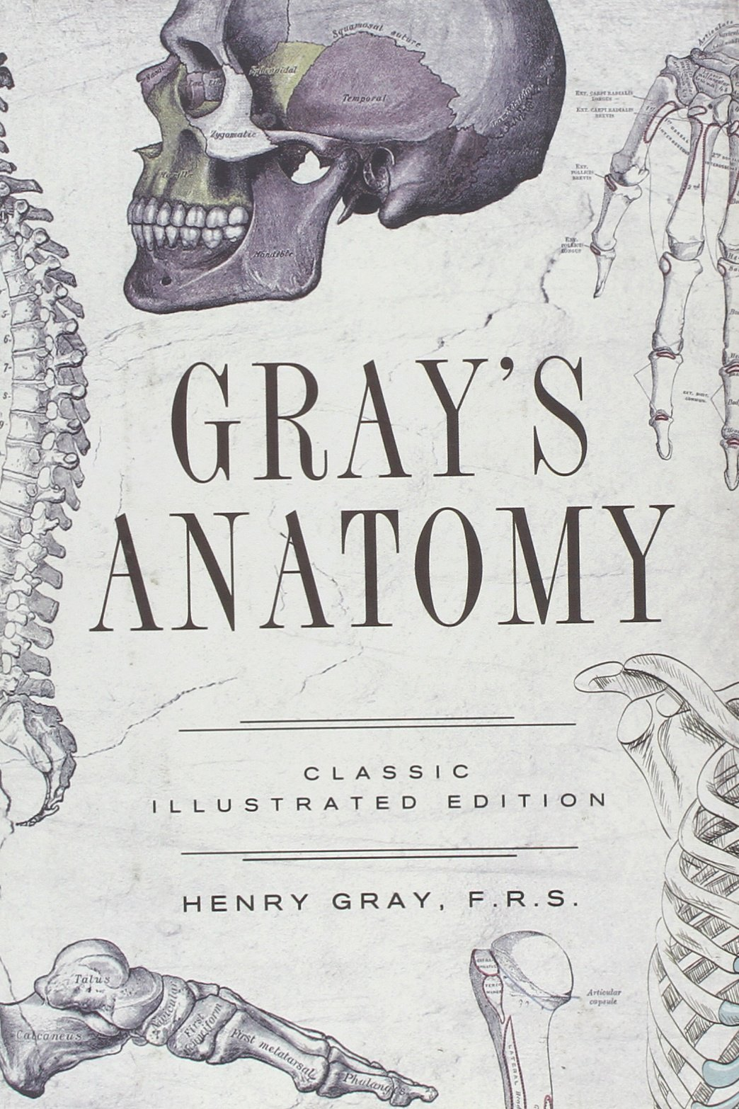 Gray\'s Anatomy: Classic Illustrated Edition: Henry Gray ...