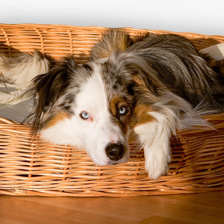 Platz 1: Aumüller Weidenkorb für Hunde