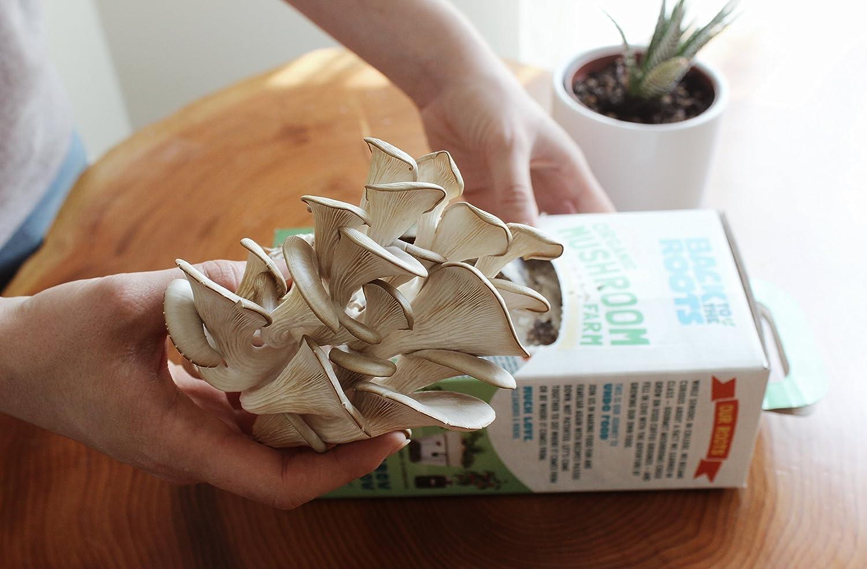 Organic Mini Mushroom Grow Kit Harvest Gourmet Oyster Mushrooms in 10 Days Unique Gift Top Gardening Gift