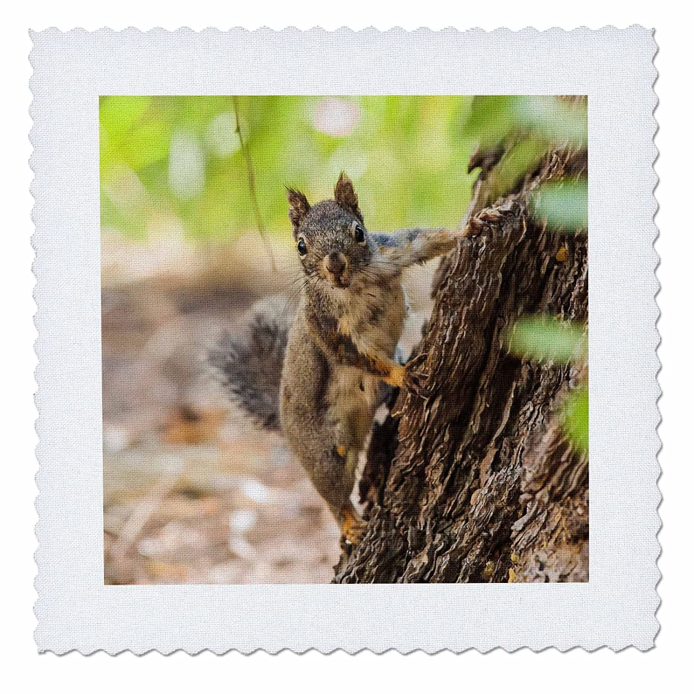 3dローズEastern Sierra Nevada an inquisitive DC - SquirrelまたはChickareeキルト正方形、6 x 6