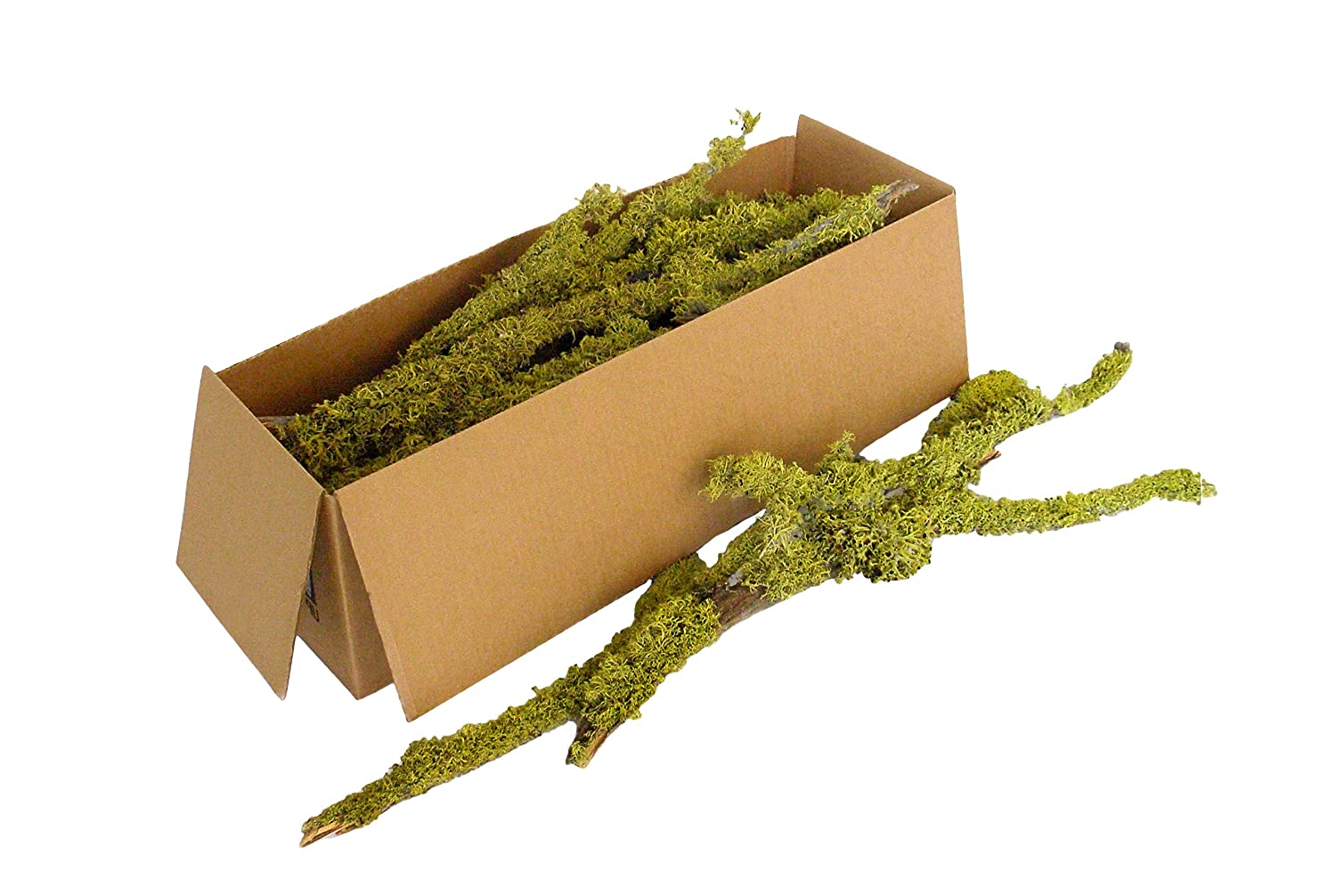 Super Moss (23535) Lichen Parmelia (Branched), Burgundy, 4oz Supermoss 7 59834 23535 4