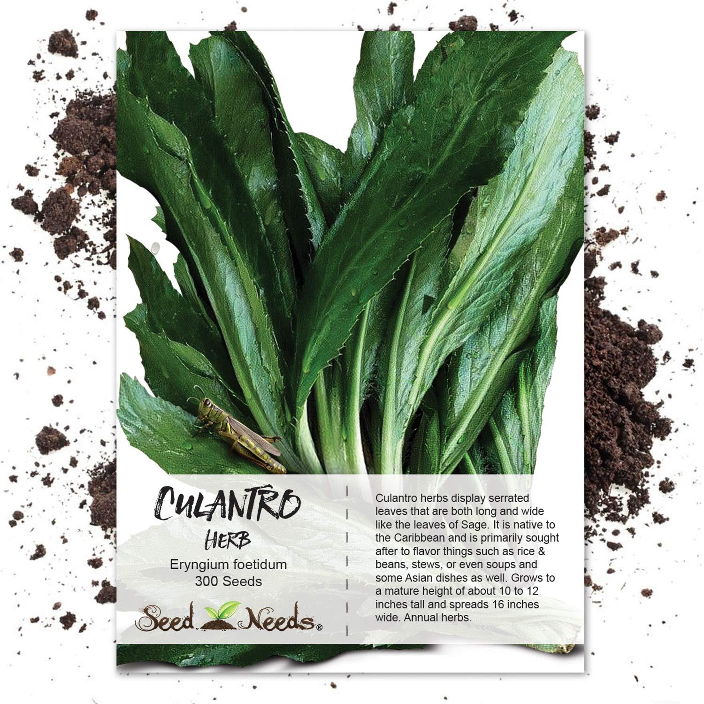 Seed Needs, Culantro Herb (Eryngium foetidum) 300 Seeds Non-GMO