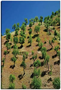 Olive Trees on a Hill in Andalusia Home Decorations for Living Room,Spain Wall Art Decor,8 x12in