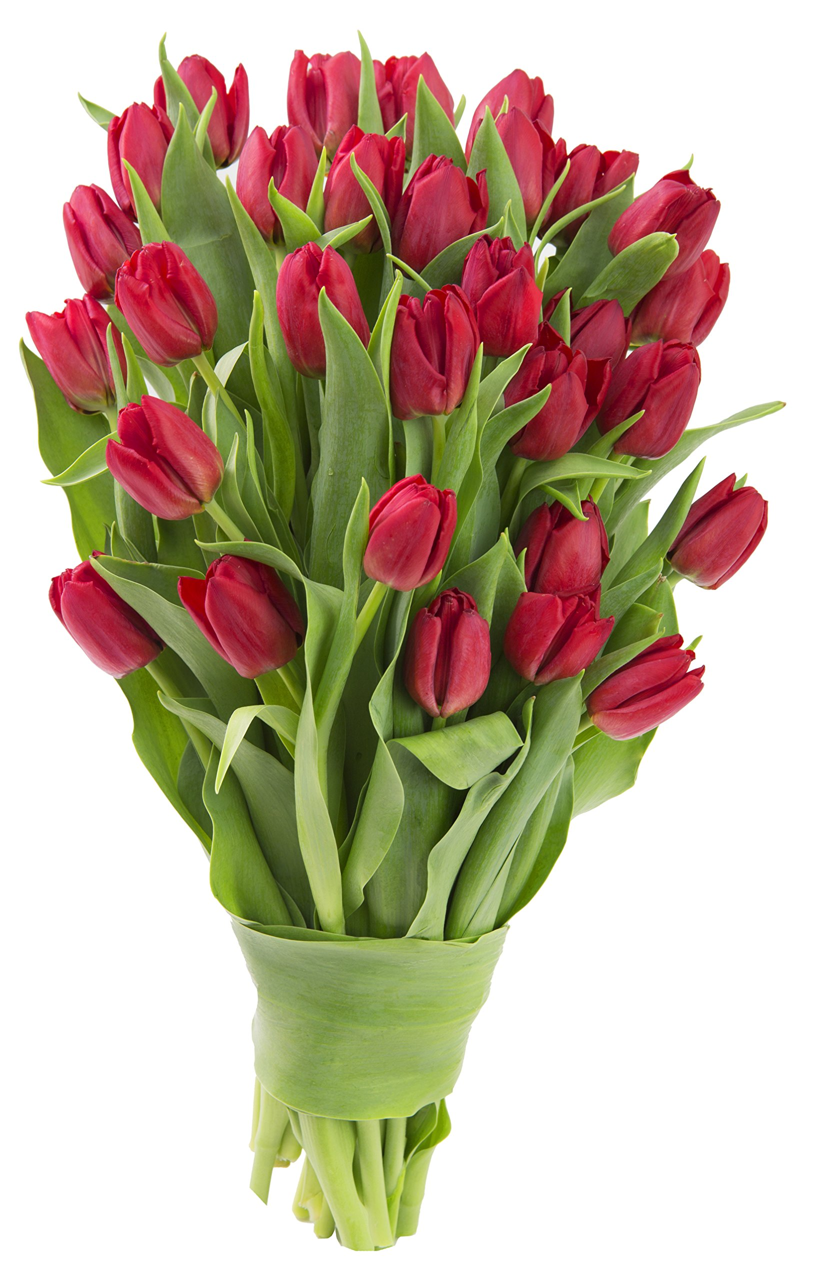 Blooms2Door 30 Red Tulips (Farm-Fresh Flowers, Cut-to-Order, and Homegrown in the USA)