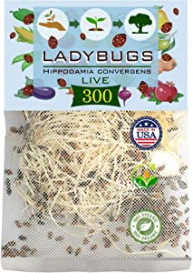 Clark&Co Organic 300 Live Ladybugs - Good Bugs for Garden - Hippodamia Convergens Beetles - Guaranteed Live Delivery!…