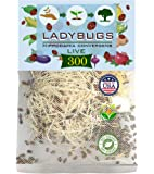 Clark&Co Organic 300 Live Ladybugs - Good Bugs for Garden - Pre-Fed Hippodamia Convergens - Guaranteed Live Delivery!