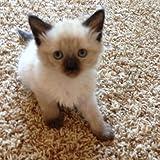 Cuddly Cute Kittens!