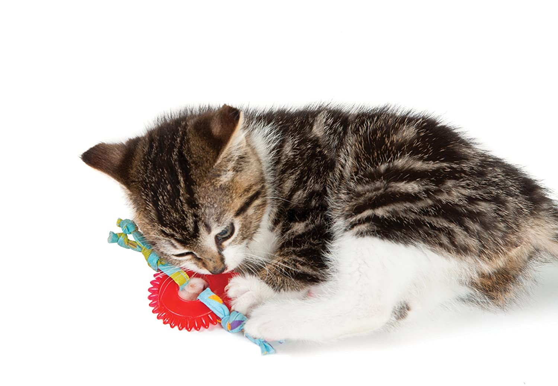 Amazon.com : Petstages Dental Kitty Chew Wheel, 5\