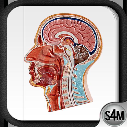 Atlas of Anatomy (Human)