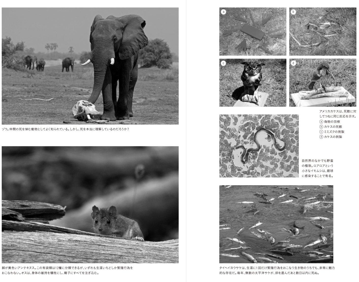 アンテキヌス 動物学者が死ぬほど向き合った「死」の話 ──生き物たちの終末と進化の科学 | ジュールズ・ハワード, 中山 宥 |本 | 通販 | Amazon
