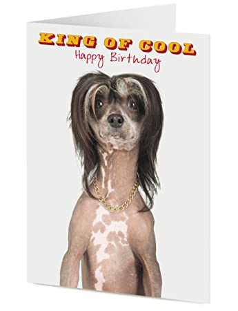 King of cool happy birthday card funny chinese crested dog amazon king of cool happy birthday card funny chinese crested dog bookmarktalkfo Choice Image