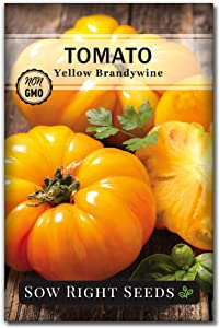 Sow Right Seeds - Yellow Brandywine Tomato Seed for Planting - Non-GMO Heirloom Packet with Instructions to Plant a Home Vegetable Garden - Great Gardening Gift (1)