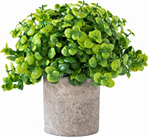 Round Cylinder Pot Small Artificial Plants in Pots Bamboo For Home Decor Fake Faux Feaux Face Decorative Plant Decoration Arrangements Mini Artificial Potted Plants Greenery Decor Shelf Desk Office