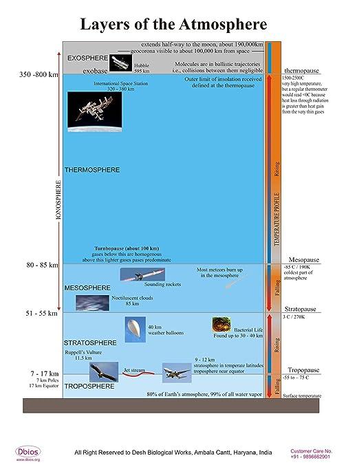 Dbios Digitally Printed The Brain Laminated Poster Educational Wall Charts