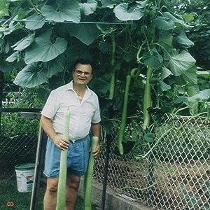 Organic Cucuzzi Gourd - 2 Gram Packet ~ 10 Seeds - Organic, Non-GMO, Heirloom, Open Pollinated - Farm & Garden Vegetable Gardening Seeds