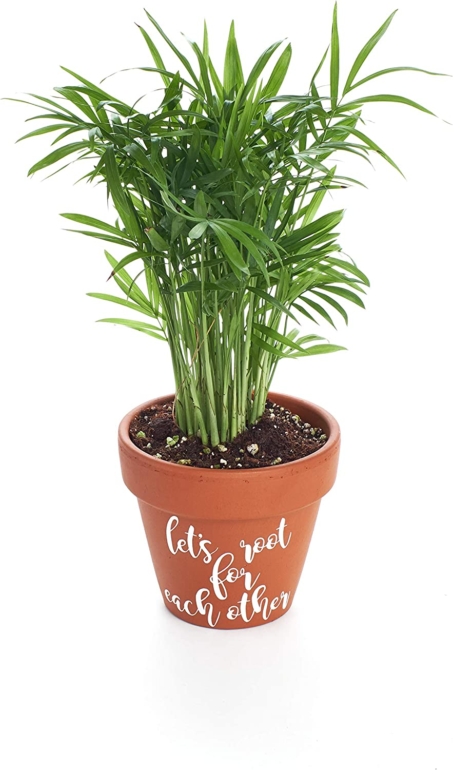 Shop Succulents Let s Root for Each Other House Plant Planter in Terracotta Pot by Shop Succulents 4 House Plant Air Purifying Indoor Outdoor Plant Home Decor