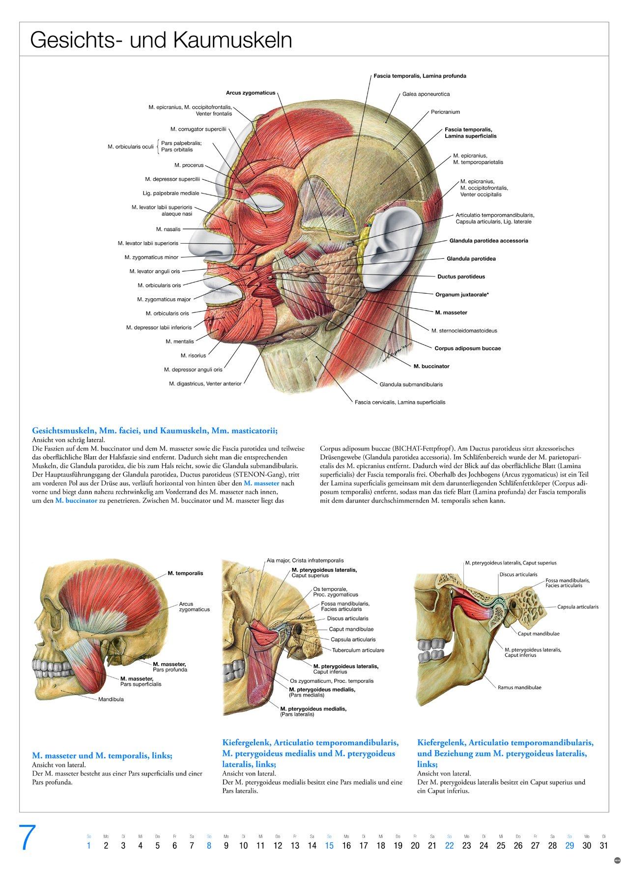 Gemütlich Anatomie Und Physiologie 1 Lehrbuch Fotos - Anatomie Ideen ...