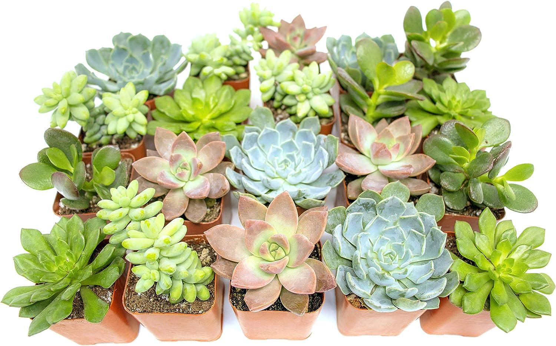 succulents window