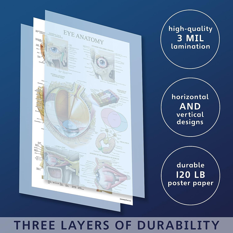 LAMINATED Eye Anatomical Poster - Human Eye Anatomy Chart - 18 x 27 ...