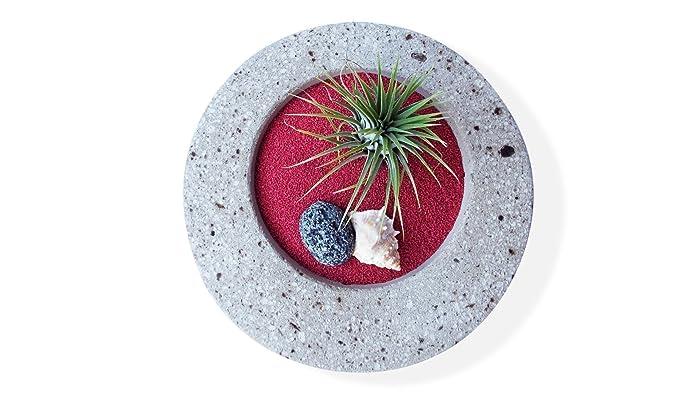 Pot de fleur rond en ciment 15 cm avec tillandsia ionantha rubra