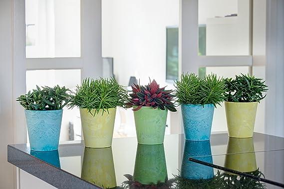 Ivyline Artstone Maceta para Flores Claire, Resistente a Las heladas y Ligera, Verde Lima, 17x15cm