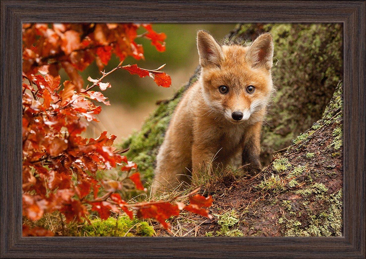 24x16 Giclee Art Print, Gallery Framed, White Wood Baby Fox Kit