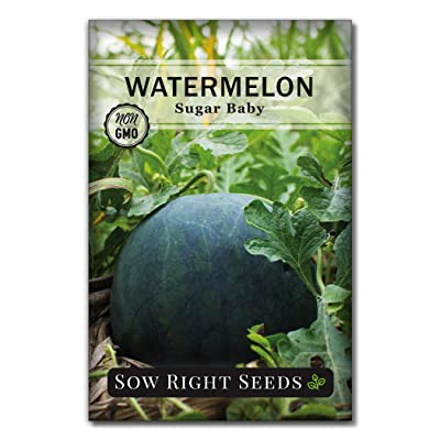 Sow Right Seeds - Sugar Baby Watermelon Seed for Planting - Non-GMO Heirloom Packet with Instructions to Plant a Home Vegetable Garden - Great Gardening Gift (1) : Garden & Outdoor