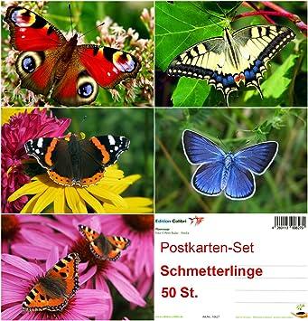 TIER-BABIES Postkarten-Set - ideal f/ür Postcrossing und Vielschreiber 5 Motive /á 10 St. = 50 St. umweltfreundlich da klimaneutral gedruckt Von EDITION COLIBRI