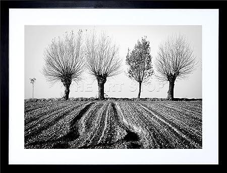 9x7 trees horizon black white framed art print picture mount photo f97x1560